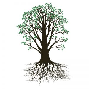 functional-medicine-tree-roots